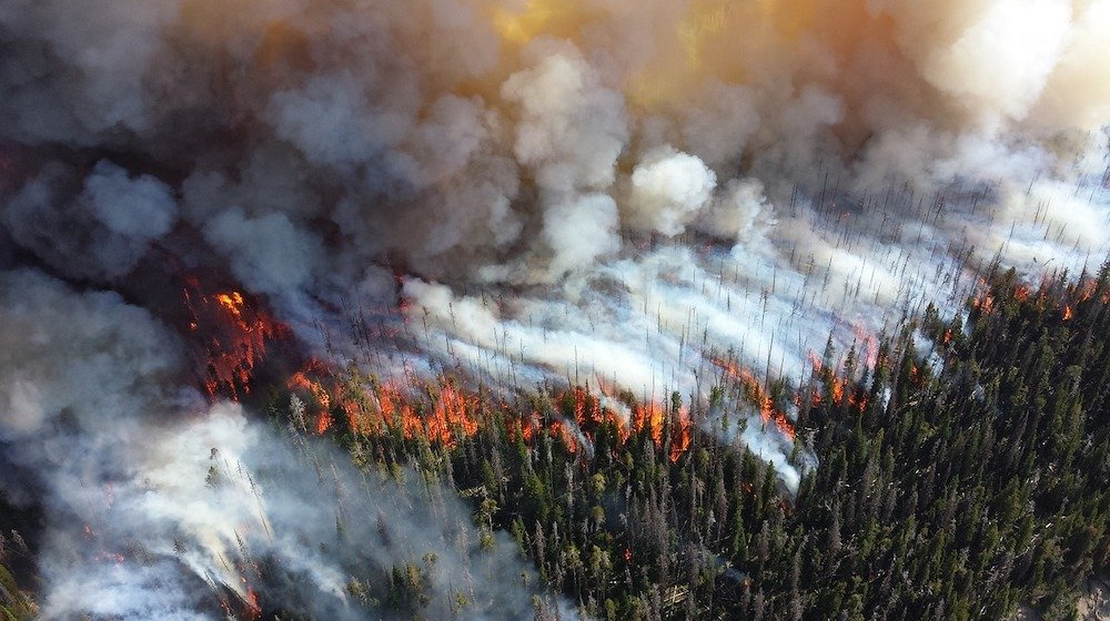 Wildfire Danger feature