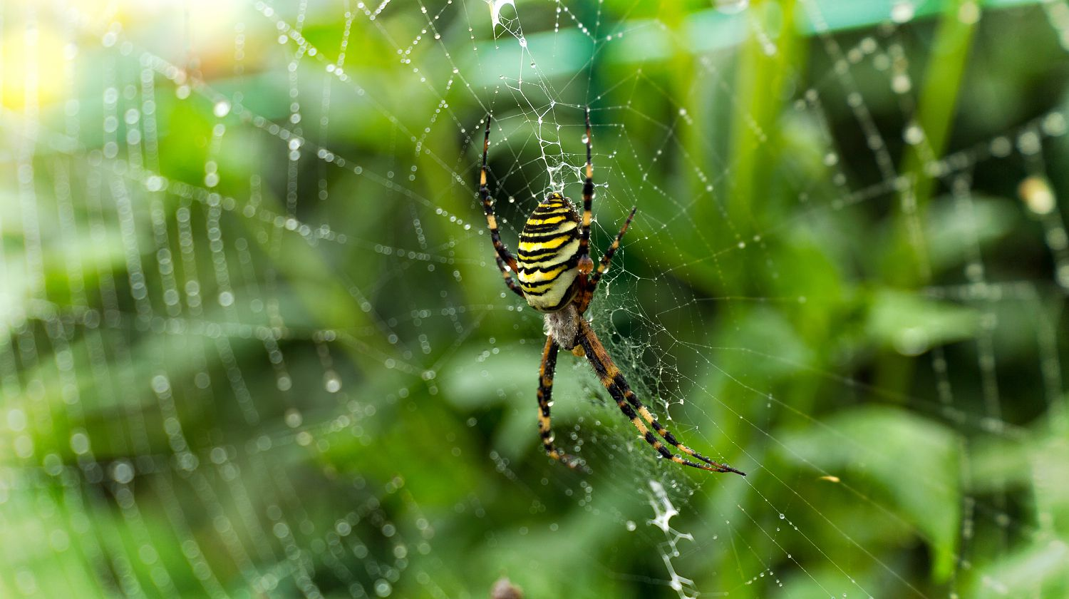 Spider on web | Natural Ways To Repel Spiders | Featured