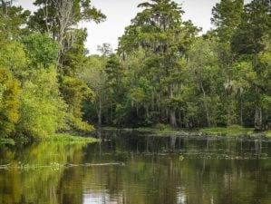 best campgrounds louisiana