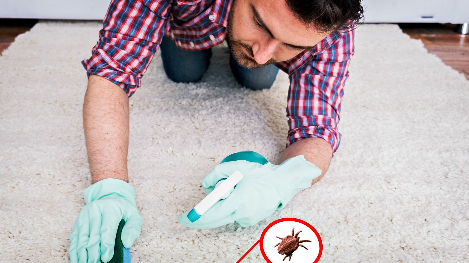 Wiping wooden white carpet and floor with a sponge | Natural Remedies To Get Rid Of Fleas In And Around Your Home | Featured