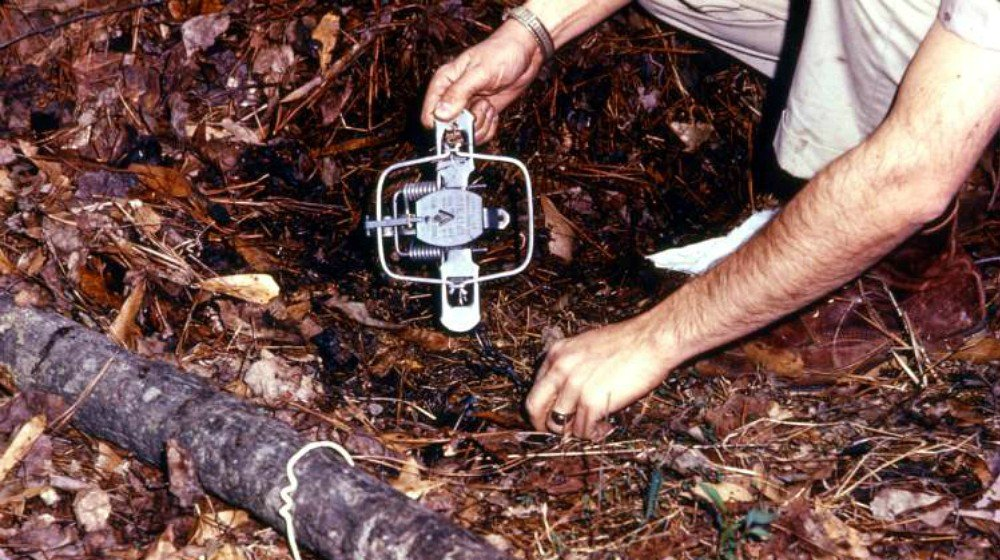 Feature | Tips To Become A Better Trapper | Learning Trapping Basics