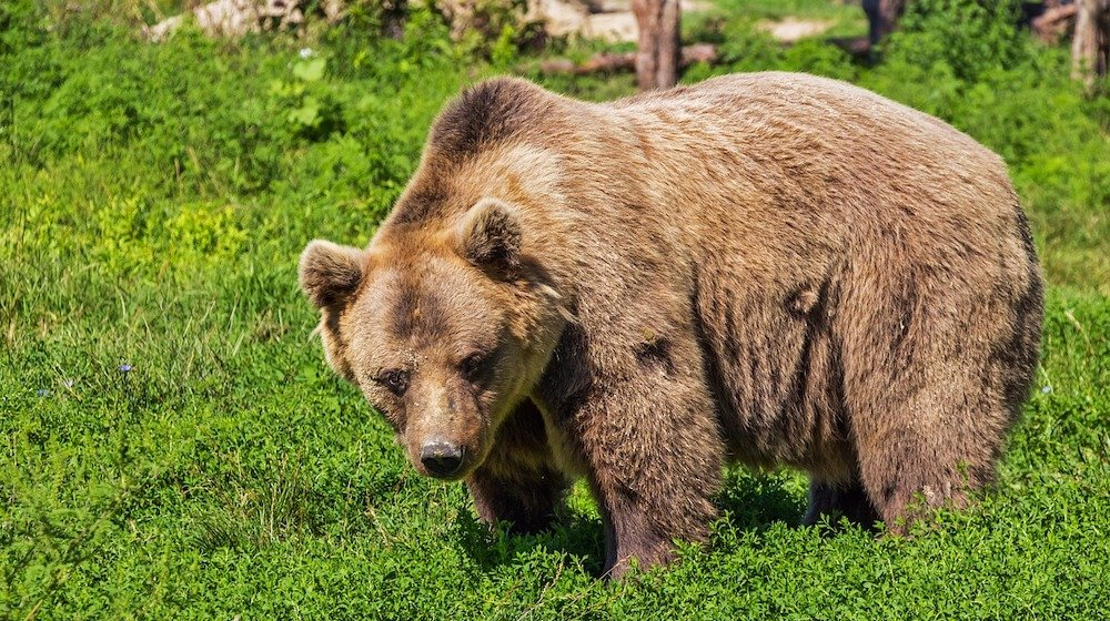 Feature | What NOT To Do In Bear Country USA This Winter | friendly grizzly bear