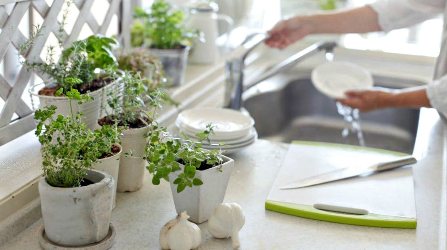 Feature | Herbs plants inside the house | Incredible Medicinal Herbs For Your Indoor Garden