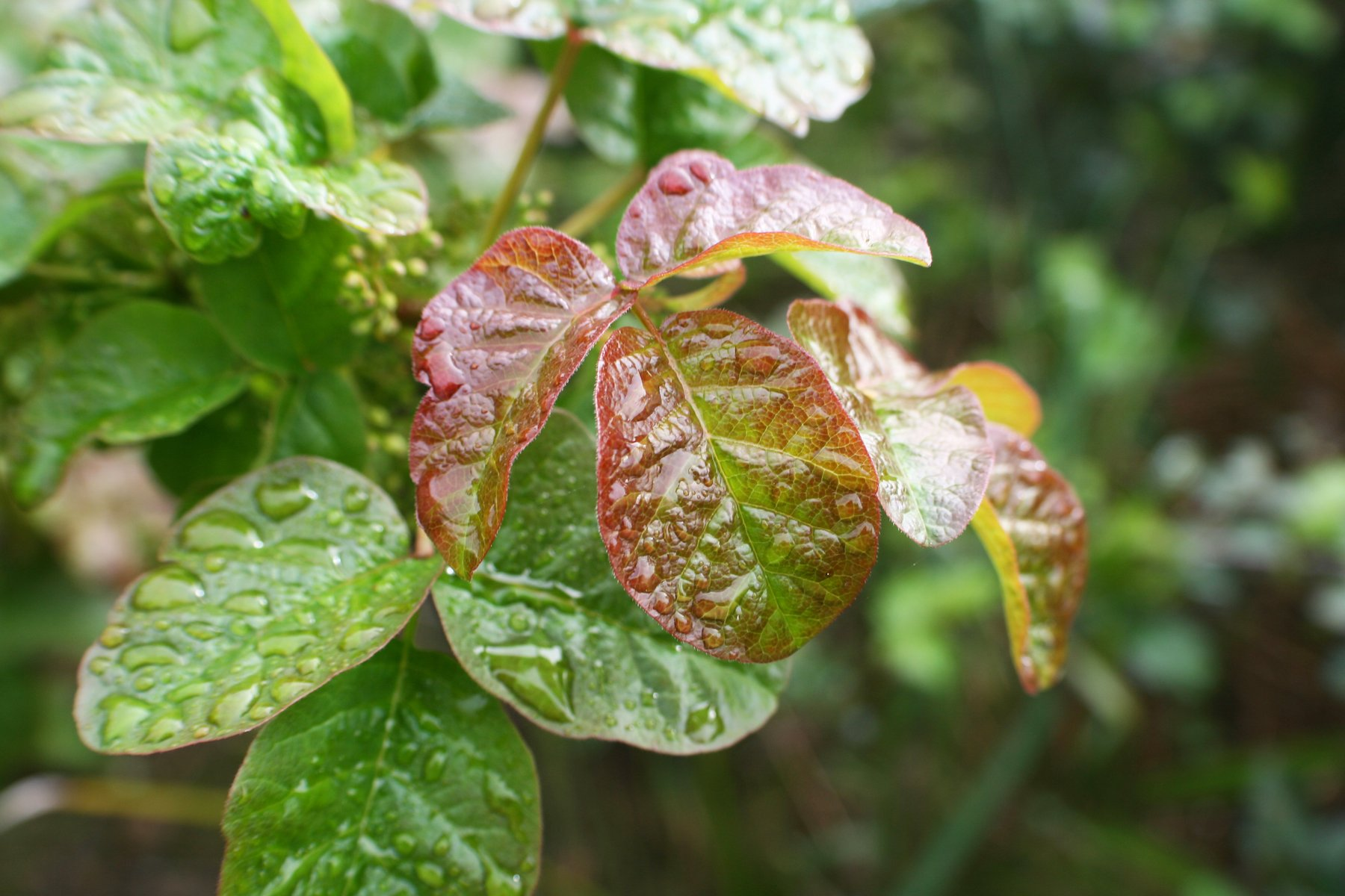 Top Poisonous Plants to Look Out for in the Wild