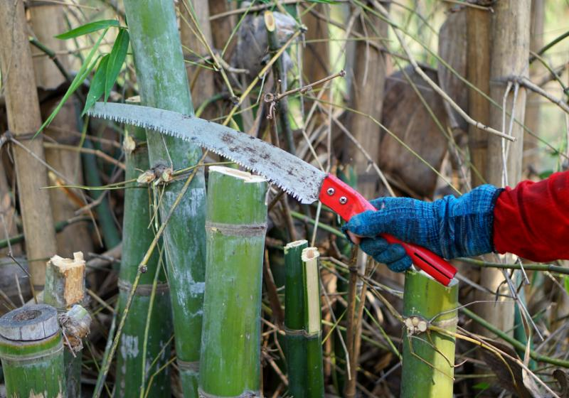 cutting green bamboo tree by handheld   bamboo tiny house