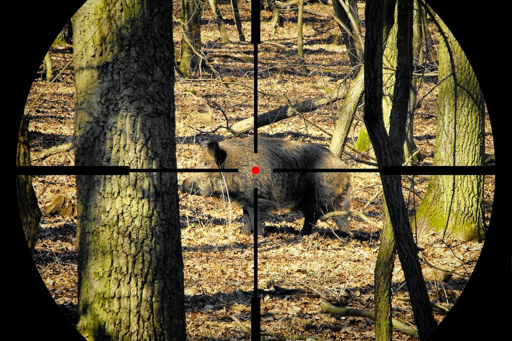 Top Rifles for Hog Hunting