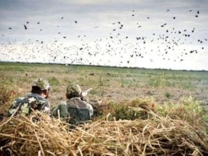 Father sun hunting | Dove Hunting Tips For Beginners | Featured