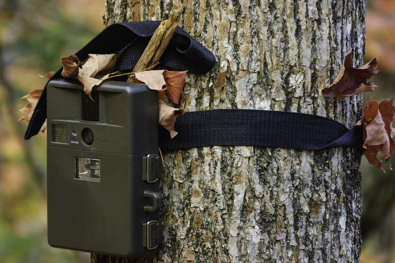 camera attached to a tree, used by hunters to spy wild animals | deer hunting gear list