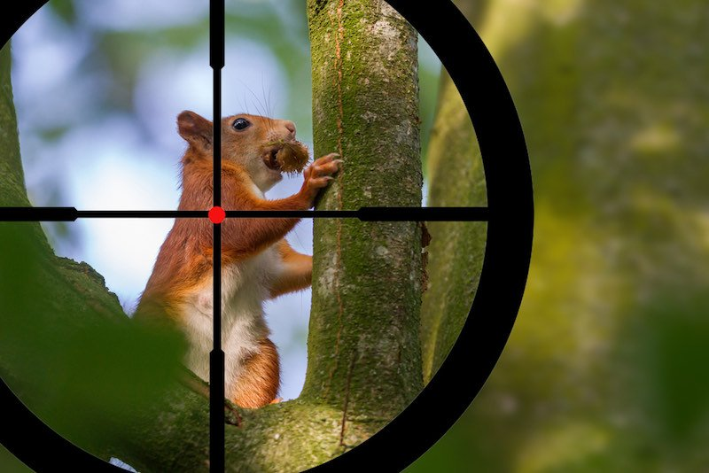 Hunting a squirrel in a tree | squirrel hunting with shotgun